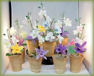 Orchideen der Kursteilnehmerinnen